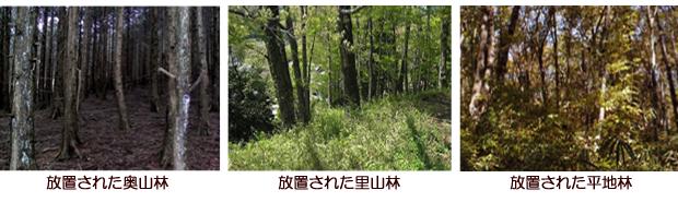 放置された森林