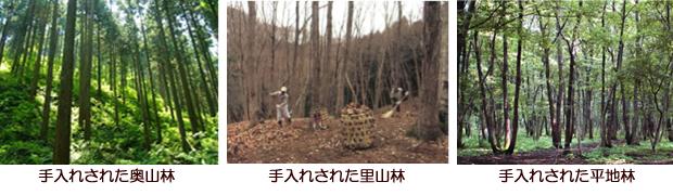 手入れされた森林