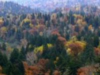 針広混交林の例(北海道)