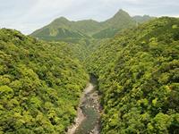照葉樹林の例(屋久島)