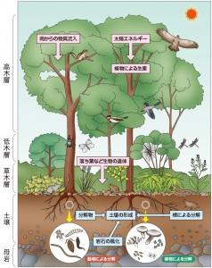 森林の生物<森林生態系イラスト>