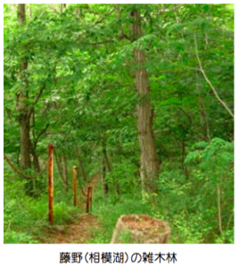 藤野(相模湖)の雑木林