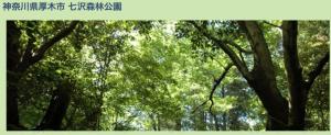 神奈川県厚木市 七沢森林公園