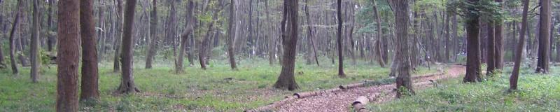 木もれびの森散策路